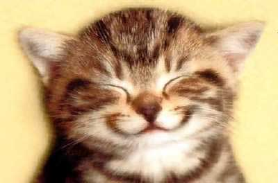 smiling-cheerful-cat